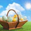 Stock Photo: Trug Of Easter Eggs