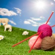 Knitting Yarn With Sheep — Stockfoto