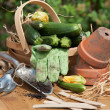 Courgette Basket With Garden Tools - Stock Photo