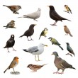 British Garden Birds - Stockfoto