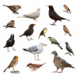 Stock Photo: British Garden Birds