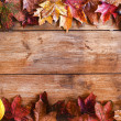 Foto de Stock  : Autumn Leaves Frame