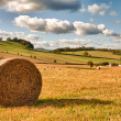 Stock Photo: Perfect Harvest Landscape
