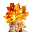 Fall Leaves Still Life — Stock Photo #11466432