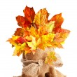 Fall Leaves Still Life — Stock Photo