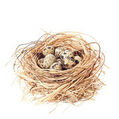 Nest Of Quail Eggs — Stock Photo