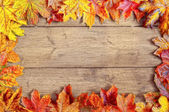 Autumn Leaf Border — Stock Photo