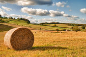 Perfect Harvest Landscape — Stock Photo