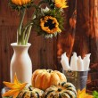 Sunflower & Gourds Still Life — Stock Photo