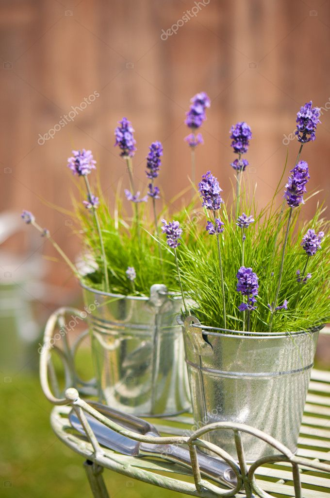 Buckets of lavender flowers amonst grass in the garden with trowel, watering can in background — Stock Photo #11481542