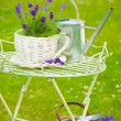Summer Lavender — Stock Photo