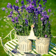 Lavender — Stock Photo #11505663