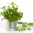 Stock Photo: Fresh Garden Herbs