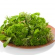 Herb Platter — Stock Photo