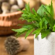 Stock Photo: Fresh Garden Mint