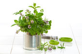 Fresh Garden Herbs — Stock Photo