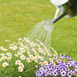 Watering Summer Flowers — Stock Photo