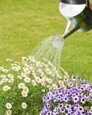 Watering Summer Flowers — Stock Photo