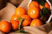Clementine Still Life — Stock Photo