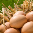 Freshly Laid Eggs — Stock Photo #11579429