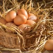 basket of eggs — Stock Photo