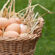 Fresh Eggs - Stock Photo