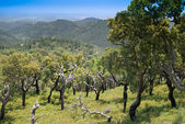 Scenic View Of Monchique Mountains - Portugal — Stock Photo