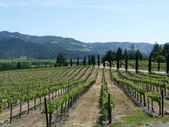 Napa Valley Vineyards — Stock Photo