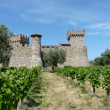Castle in the vineyards — Stock Photo #11420068