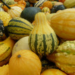 Gourds — Stock Photo #11448029