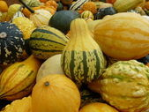 Gourds — Foto de Stock