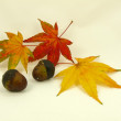 Acorn and autumn leaves - Stock Photo