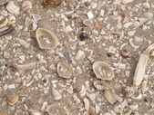 Close up van strand zand — Stockfoto