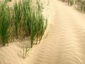 Sand dunes — Stock Photo