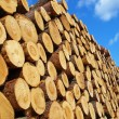 Pile of logs — Stock Photo #11617860