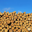 Pile of logs — Stock Photo #11617870