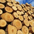 Pile of logs — Stock Photo #11617889