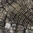Tree or log rings — Stock Photo