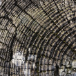 Tree or log rings — Stock Photo #11617918