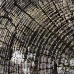 Tree or log rings — Stock Photo