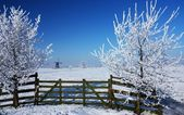 Dutch winterlandscape — Stock Photo