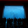 Dubai Aquarium - Stock Photo