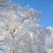 Snowfall and tree — Stock Photo