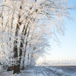Stock Photo: Winter portrait scape