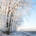 Winter portrait scape — Stock Photo