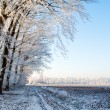 Stock Photo: Winter
