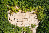 Wall leaves — Stock Photo