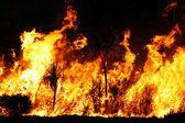 Bushfire close up at night — Stock Photo