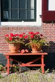 голландские цветы & сабо — Стоковое фото