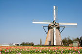 Windmill and tulips — Stock Photo